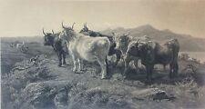 Rosa Bonheur Grande estampe troupeaux dans  montagnes écossaise 1857 Vache Cow