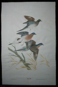 1973 Original John Ruthven Aquatint Series Passenger Pigeon Etching SN 396/500