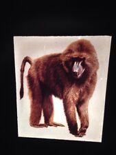 Kwele Congo- Gon Mask Olive Baboon- African Tribal Art 35mm Slide