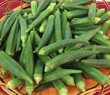 50+ Okra Seeds Emerald Okra Vegetable Fresh Garden Seeds USA