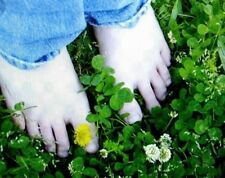 Hardy Ground Cover, Dutch White Clover 250 seeds, Plant Now🔥 CabinFeverTraders