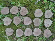 "Cement Brown Leaf Lot 15pc Fairy 1 1/2"" Step Concrete Garden Accent Craft"