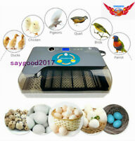 12 Eggs Incubator Intelligent Digital Display Automatic Hatcher Turning Machine