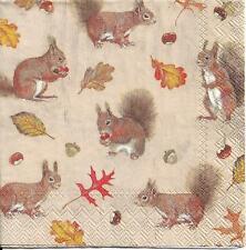 Lot de 3 Serviettes en papier Cocktail écureuils Decoupage Collage Decopatch