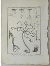 HYDRE, MOLLUSQUE - GRAVURE 18e siècle- ENCYCLOPEDIE DIDEROT, BENARD DIREXIT,