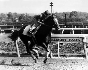 Triple Crown Racehorse AFFIRMED Glossy 8x10 Photo Steve Cauthen Warm-up Print