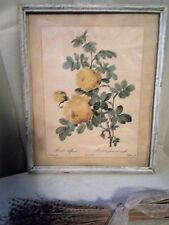 ~LOVELY ANTIQUE PJ REDOUTE YELLOW ROSES CHIPPY WHITE FRAMED PRINT COTTAGE CHIC