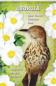 STATES4GEO - GEORGIA, State Bird: Brown Thrasher, State .. from HibiscusExpress