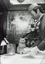 "photo vintage . sa Majesté "" Millap 1er "" chat Persan de haute lignée . Cat"