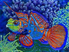 SIGNED TROPICAL ART PRINT - CORAL REEF TECHNICOLOR MANDARIN FISH: KISS MY FACE