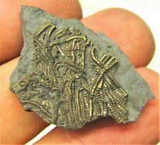 Gold pyrite crinoid fossil UK Jurassic Pentacrinites fossilis Charmouth minerals