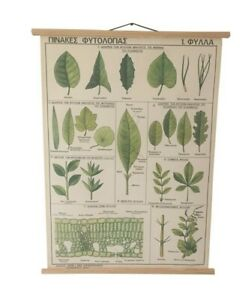 Different type of Leaves Pull Down Chart, Vintage Botanical Science School Map