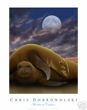 NEW Sea Lion Pups 16x20 Art Print Poster by Dobrowolski