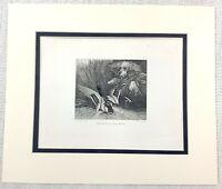 1843 Antico Stampa Mallard Wild Anatra Caccia Spaniel Gun Cane Incisione 19th C