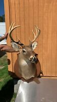Meet Frank the lonely deer Whitetail Deer Mount Taxidermy 9 point