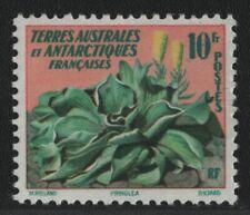 TAAF 1959 - Mi-Nr. 13 ** - MNH - Pflanzen / Plants