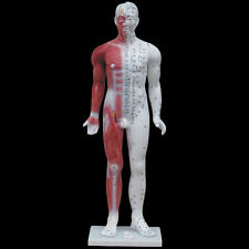 84cm Acupuncture Model with Manual (Full Body) - Anatomical Medical Anatomy