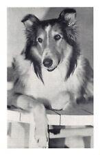 Nostalgia Postcard Dog Film Star Lassie 1949 Reproduction Card NS42