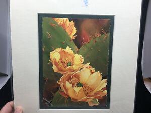 Watercolor Painting LE Prickly Pear II Heidi Rosner Print Cactus Flowers COA