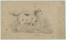RARE -SUPER - American Folk Art Drawing - Cocker Spaniel? Dog ca 1850 Signed