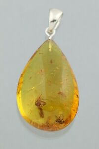 3 Nice Fossil INSECTS Genuine BALTIC AMBER Silver DROP Pendant 6.3g 211012-4