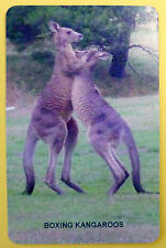 SWAP CARD. BOXING KANGAROOS. AUSTRALIAN WILDLIFE COLLECTION. BLANK BACK. NEW
