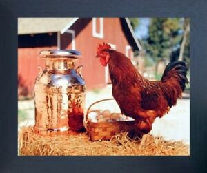 Country Chicken Rooster Milk Can and Egg Basket Wall Art Decor Framed Picture