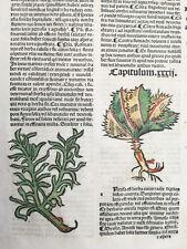 Incunable Leaf Hortus Sanitatis Ancusa Colored Woodcut Venice - 1500