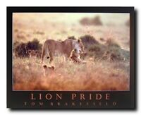 Lion Pride & Cubs Wild African Animal Art Print Wall Decor Poster (16x20)