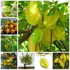 Carambola Seeds Bonsai Star Tree Exotic Fruit Edible Garden Flower Plants 50 Pcs
