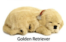 Golden Retriver- Il cucciolo che respira - PERFECT PETZZZ
