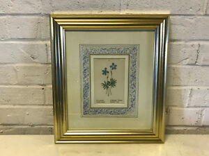 Antique 19th Cent. Floral Botanical Hand Colored Engraving Print Pinnated Violet