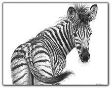 Zebra Print imagen imagen Wildlife Pared Arte Cartel A3 Animal Dibujo boceto B/W
