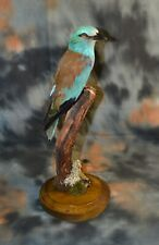 Stuffed European roller sivoraksha taxidermy Bird Real 01