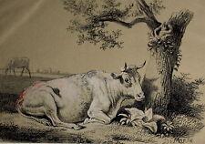 Zoologie & Tiere