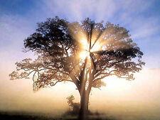 Vibrational Energetic Remedy: Increase Awareness, Spirituality & Fruit of Spirit