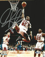 Bulls Dennis Rodman Authentic Signed 8X10 Photo Vs Hornets BAS Witnessed