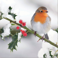 Pack of 8 Festive Robin Marie Curie Charity Christmas Cards Xmas Card