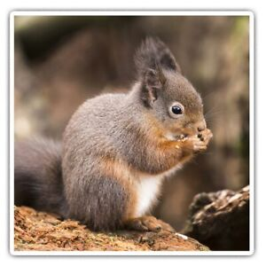 2 x Square Stickers 10 cm - Squirrel Eating Nuts Cool Gift #14267