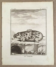 c.1765 Original French Animal Engraving LE LEMING The Lemming Buffon & Daubenton