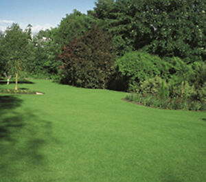 500 gms - Hard Wearing Lawn Seed with Ryegrass for Repairs or Patches