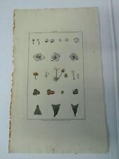 BUCHOZ Le grand jardin de  l'univers 1785-1791 49 x 30 cm planche 30 sur le Thé