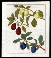 Antique Print-PLUM-DAMSON-Pomologia-Knoop-1758