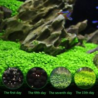 Aquarium Plant Seeds Water Aquatic Plant Grass Seed Fish Tank Decor Live Leaf