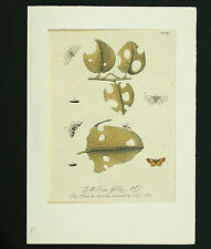 E. Albin Copper Stitch um 1720 By Hand coloured Insects Copper plate Engraving