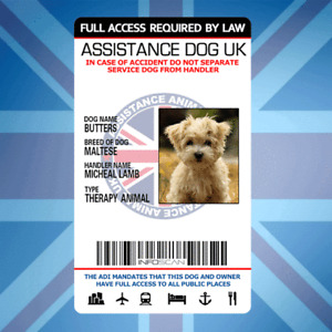 ASSISTANCE DOG UK - SERVICE CARD ID BADGE FOR UNITED KINGDOM GREAT BRITAIN ADi
