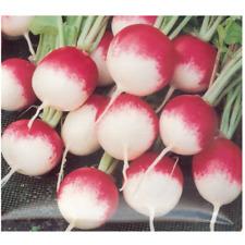 Graines de Radis rond rose à bout blanc 2 - 10 Gr +/- 1000 graines - SEB-0014