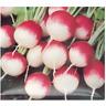 Graines de Radis rond rose à bout blanc 2 - 10 Gr +/- 1000 graines - SEB-041