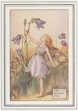 CICELY MARY BARKER c1930 THE HAREBELL FAIRY Painting Vintage Art Book Print