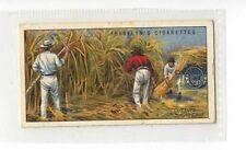 (Jz283-100) Franklyn Davey,Overseas Dominions,Cut Sugar Cane,Queensland,1923 #25